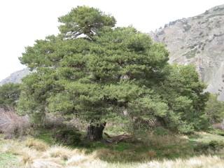 세상에서 가장 크게 성장하는 나무인